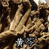 黄芩(おうごん)